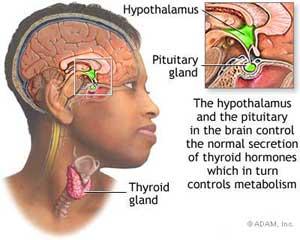 How Phentermine Works
