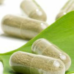 effectiveness of hoodia diet pills